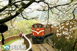 櫻花下小火車